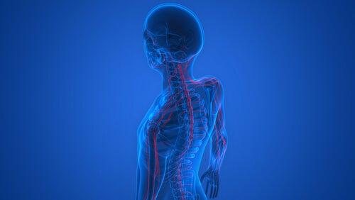 Por qué se produce el rechazo en los trasplantes? – Mejor con Salud