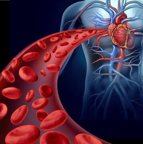 La canela tiene algunos beneficios para el aparato circulatorio.