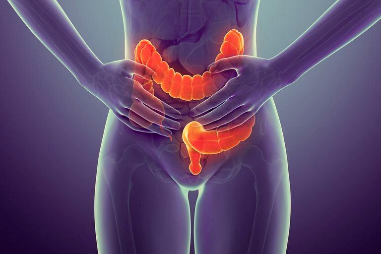 Recreación digital de intestino grueso