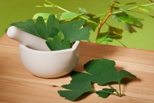 Ginkgo biloba, un ingrediente usado desde hace mucho tiempo para reducir los acúfenos.