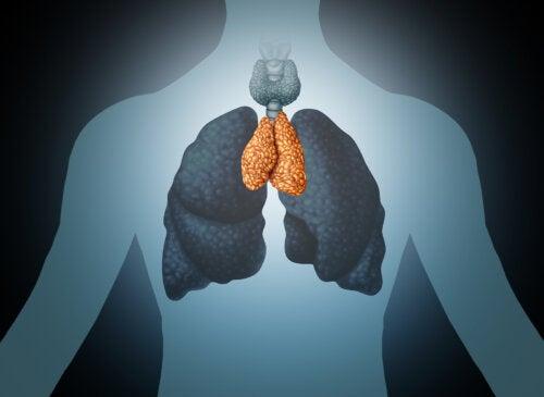 La glándula timo: mediadora del bienestar y del sistema inmunitario