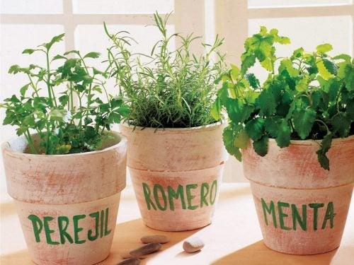 Macetas rellenas de plantas aromáticas