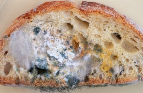 Pan con hongos