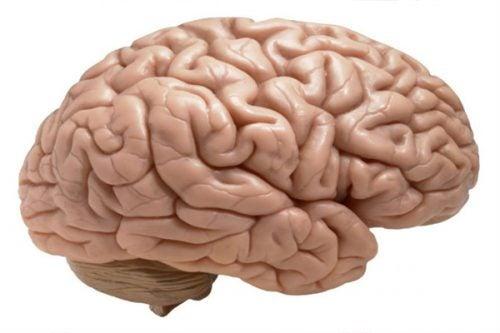 No dormir causa pérdida del tejido cerebral