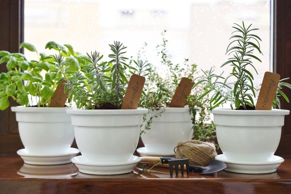 Crea tu propio jardín de plantas aromáticas