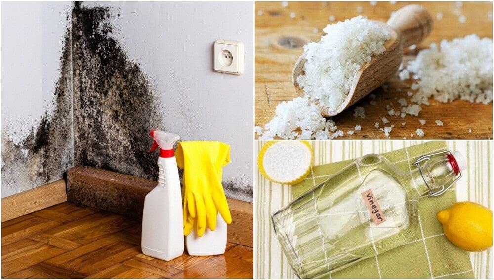 5 formas efectivas de deshacerte de la humedad de tu hogar
