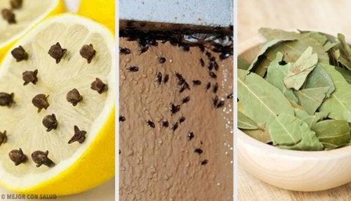 Cómo eliminar insectos de manera natural