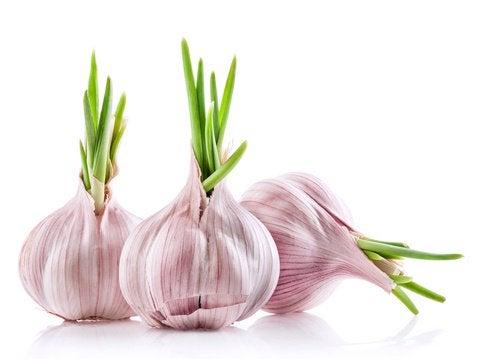 Conoce el ajo como remedio contra la hipertensión