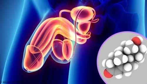 Aparato reproductor masculino y estructura de la testosterona