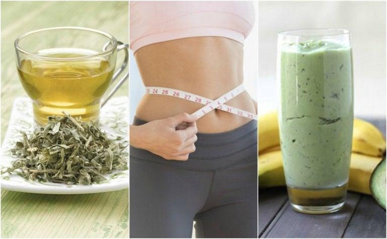 3 bebidas con té verde para bajar de peso