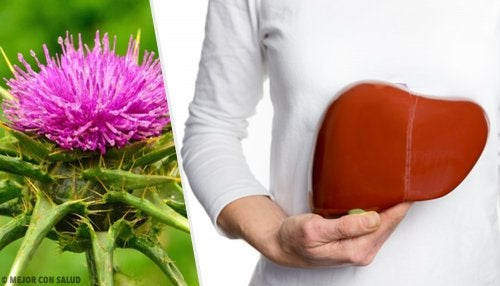 El cardo mariano: una planta popular dentro de la medicina alternativa
