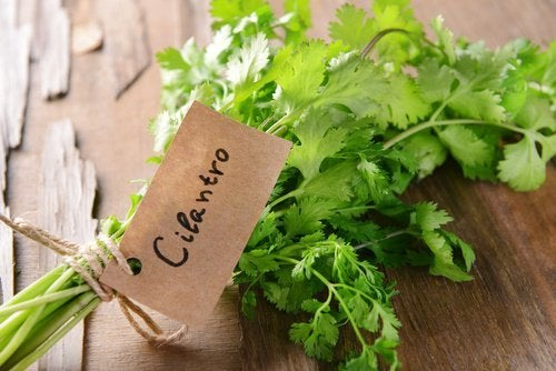Como tomar cilantro para bajar de peso