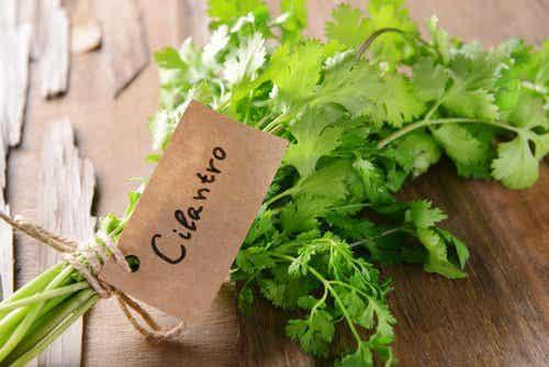 7 poderosas bondades del cilantro