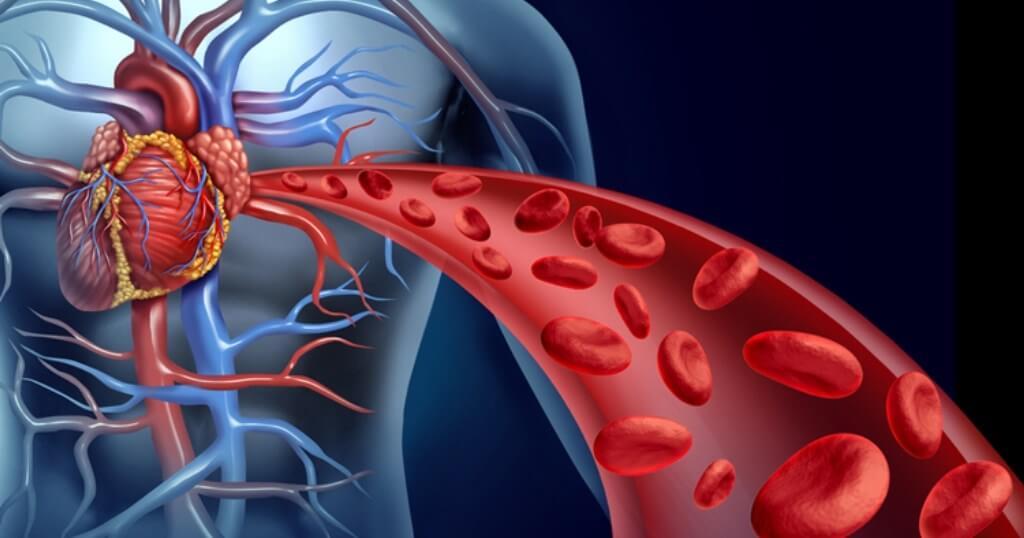 Circulação sanguínea