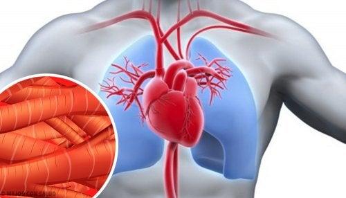 Contracción del músculo cardíaco