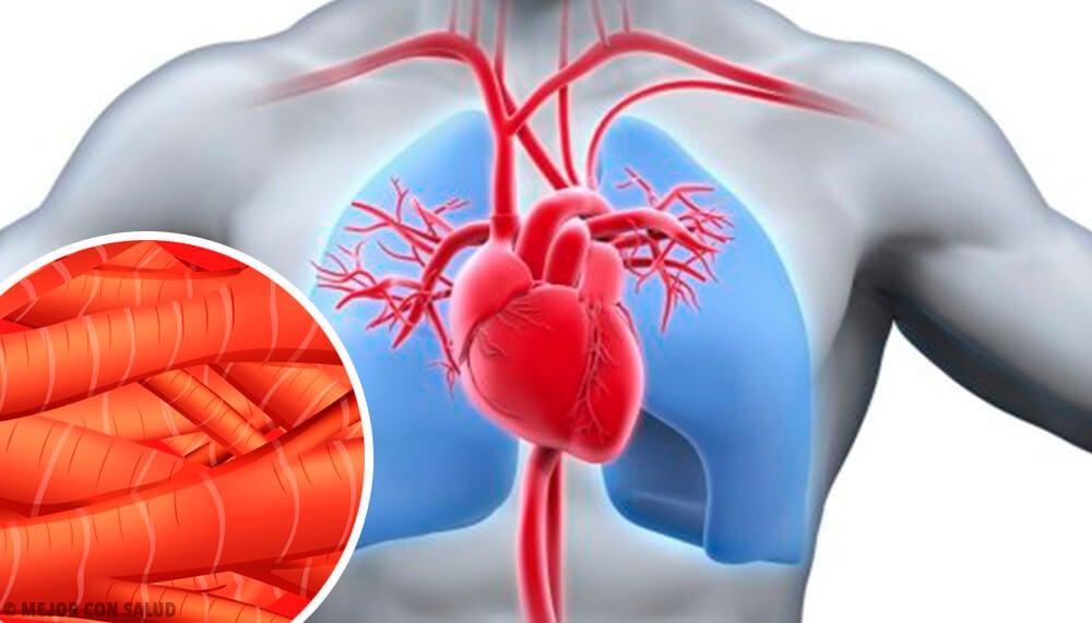 Contracción del músculo cardíaco - Mejor con Salud