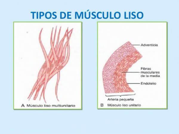 Contracción del músculo liso