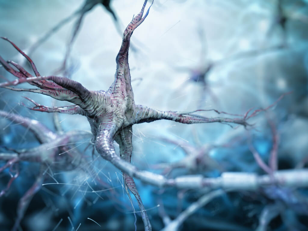 El nervio vago y su estimulación