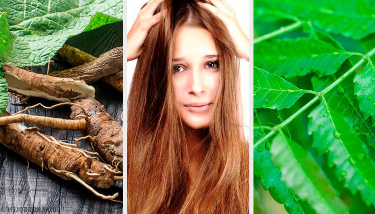 planta natural para eliminar la caspa