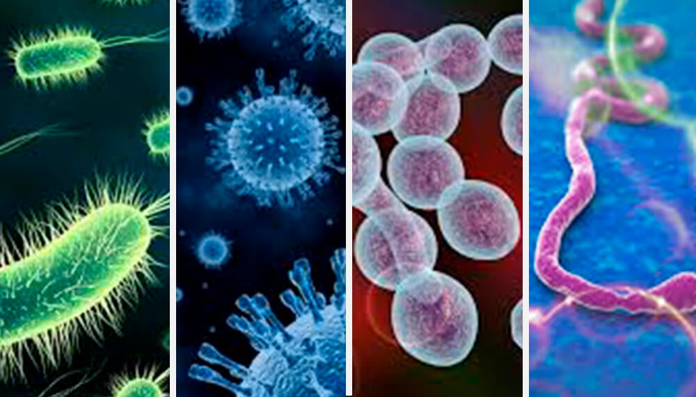 Enfermedades infecciosas