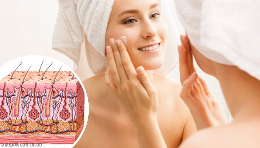 Fisiología de la piel