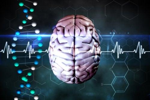 Representación de cerebro y encefalograma