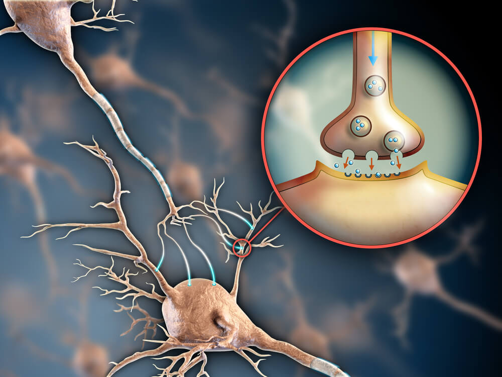 Neurotransmisores y receptores