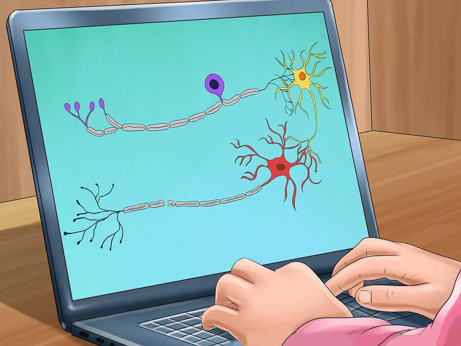 Placa neuromuscular: qué es y cómo funciona