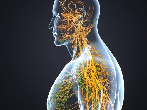 Qué sucede si se activa el nervio simpático