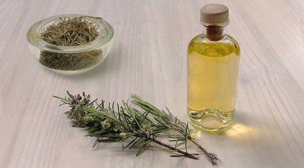 Planta de romero y aceite esencial