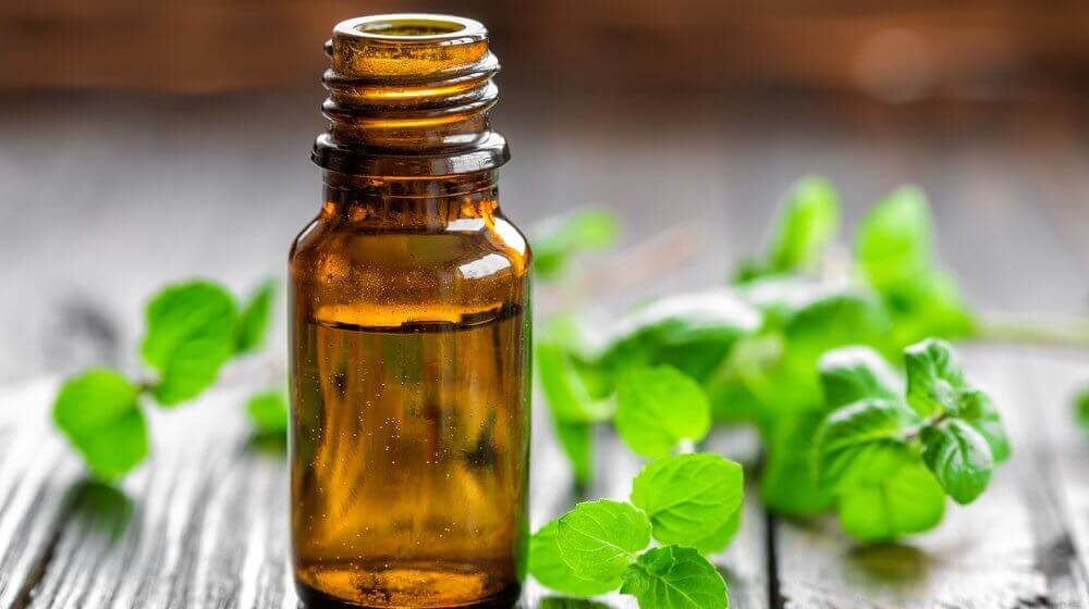 oil-mint to lose weight