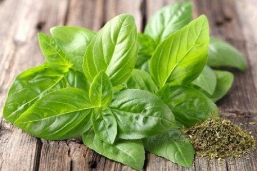 La albahaca se usa para condimentar múltiples platos, pero también tiene propiedades medicinales que pueden ayudar a reducir los acúfenos.