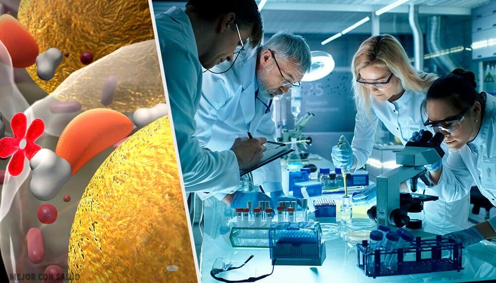Las bacterias: potentes fábricas de insulina