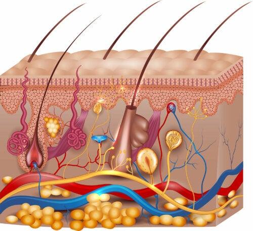 Anatomía del tacto
