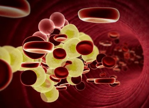 cilantro colesterol