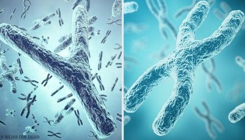 Origen genético del sexo: los cromosomas sexuales X e Y