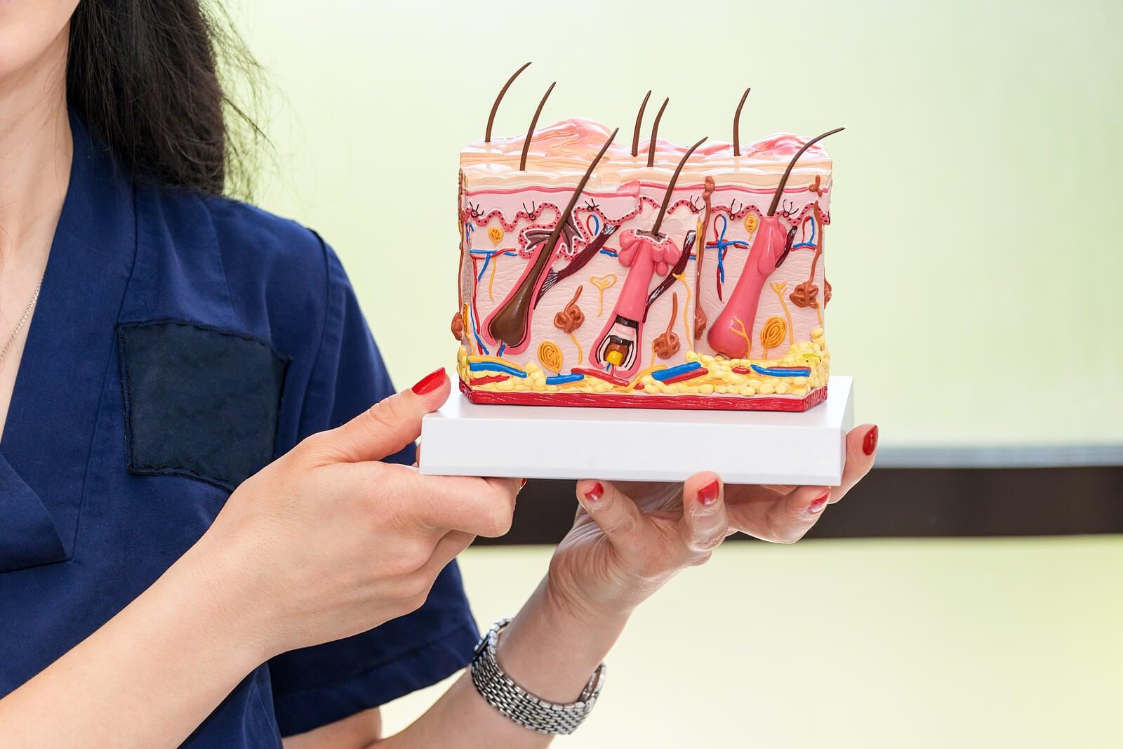 Dermatólogo con modelo de la anatomía de la piel.