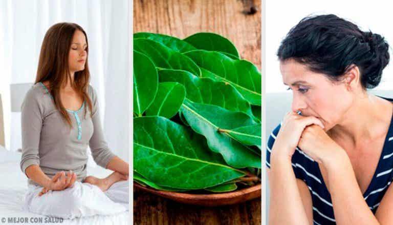 7 propiedades de las hojas de laurel que no conocías