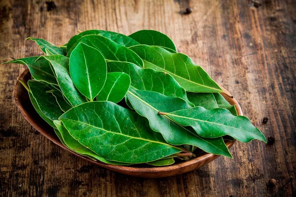 hojas-de-laurel