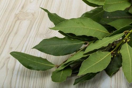 té de laurel para reducir centímetros de cintura
