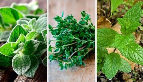 8 plantas arom ticas para el jard n mejor con salud - Plantas aromaticas en la cocina ...
