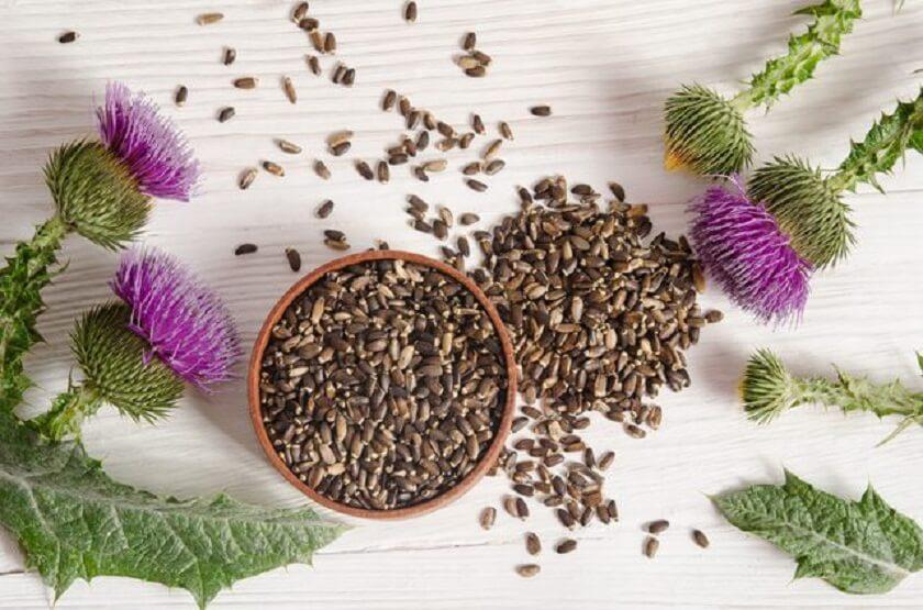 semillas-cardomariano