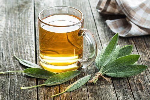 Remedios herbales para combatir la infección por Helicobacter pylori