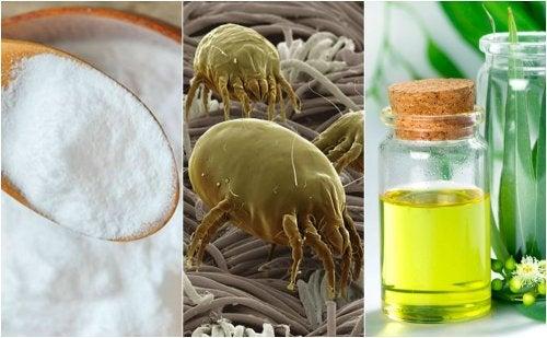 4 soluciones efectivas para eliminar los ácaros de tu hogar
