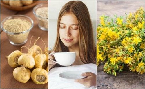 5 plantas medicinales que te ayudan a aumentar el deseo sexual