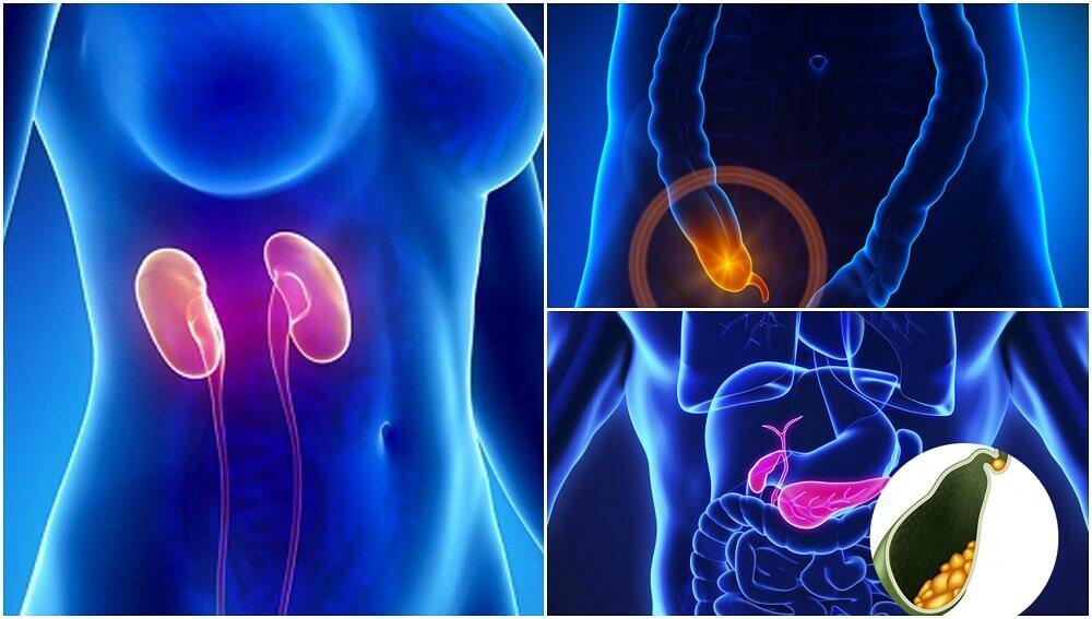 7 partes del cuerpo que no son estrictamente necesarias para vivir