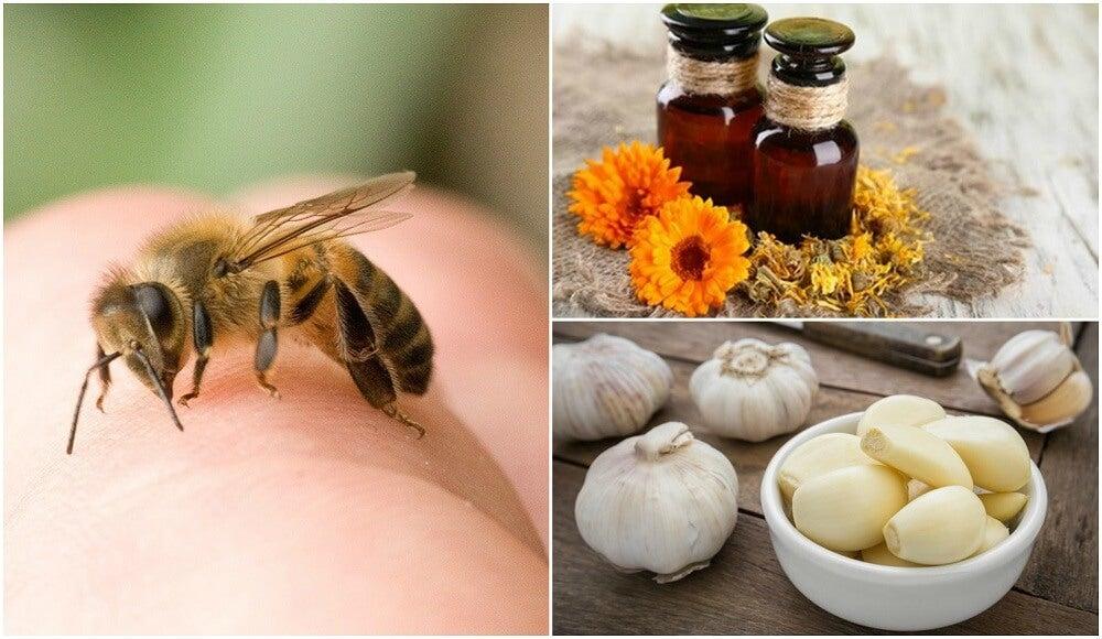 8 remedios naturales para calmar las picaduras de abeja