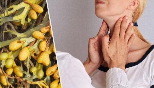 Beneficios medicinales del fucus