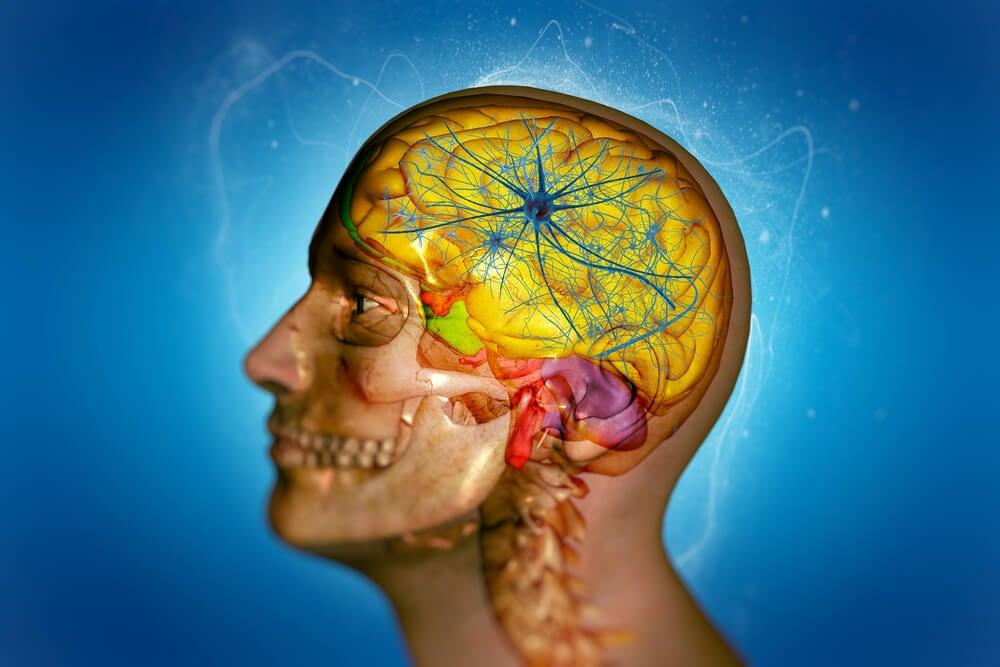 El funcionamiento de la barrera hematoencefálica