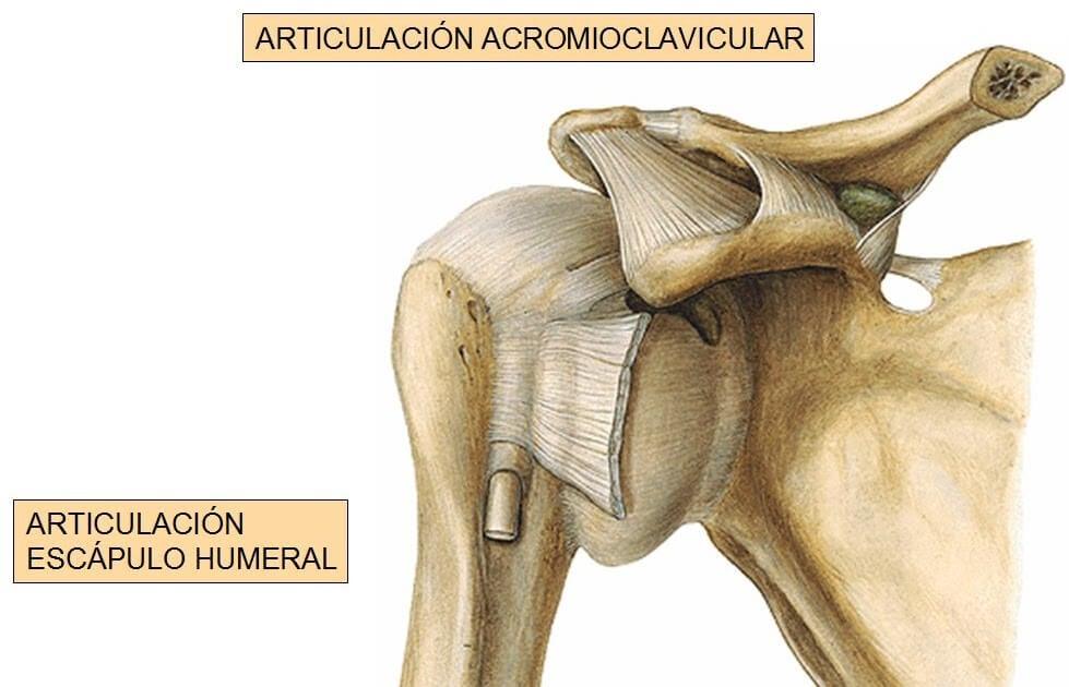 Articulación del hombro – Mejor con Salud